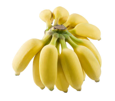 Fruits, A Bunch of Ripe Yellow Wild Bananas, Asian Bananas or Cultivated Bananas Isolated on White Background.