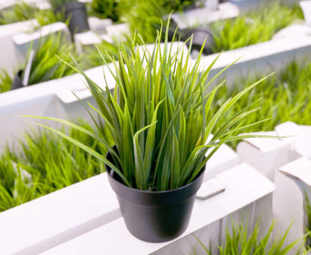 grass plot: Artificial Plant or Artificial Grass in Black Flower Plot for Home and Office Decoration without The Care.
