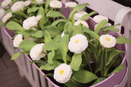 Pretty white artificial flowers with green leaves in flower pot pretty white artificial flowers with green leaves in flower pot for home and office decoration without mightylinksfo