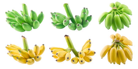 Tropical Fruits, Set of Ripe and Unripe Wild Bananas, Asian Bananas or Cultivated Bananas Isolated on White Background.