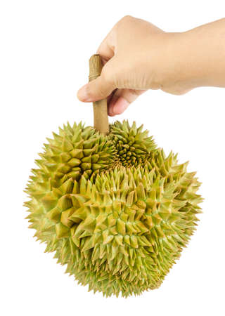 Hand Holding Fresh Ripe Durian Isolated on White Background. One of The Most Popular Fruits in The World and King of Fruits in Thailand. Imagens
