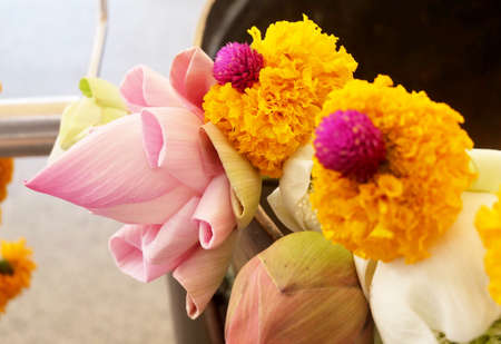 Buddhist Putting Lotuses and Marigold Flowers in Religion Bowl to Worship, Pay Respect and Make Merit with The Buddha in The Temple.