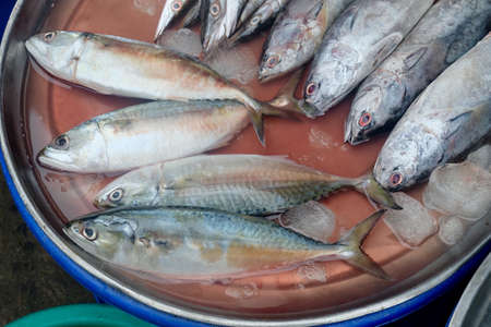 Fresh Mackerel with Spotted Tuna at The Seafoods Market. Stok Fotoğraf