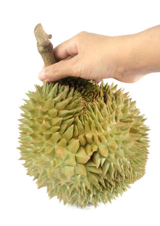 Hand Holding Fresh Ripe Durian Isolated on White