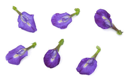 Beautiful Flower, Set of  Purple Butterfly Pea Flowers or Asian Pigeon wings Flowers Isolated on White Stok Fotoğraf