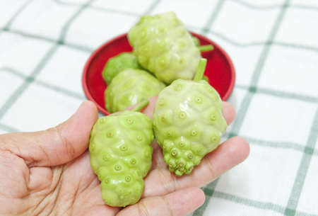 Vegetable and Herb, Hand Holding Fresh Noni, Morinda Citrifolia, Great Morinda, Indian Mulberry, Beach Mulberry or Cheese Fruits with Polysaccharide, Vitamin A, C and Calcium. The Essential Nutrient for Life.