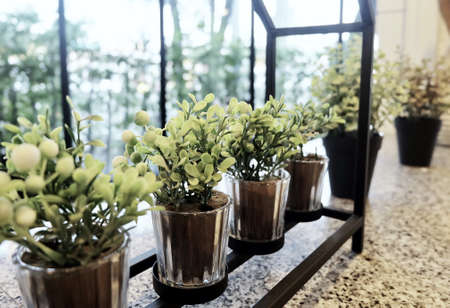 Artificial Green Plants in Flower Pots for Home and Office Decoration without The Care.