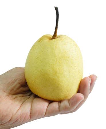 Fresh Fruit, Hand Hodling Sweet Nashi Pear, Asian Pear or Pyrus Pyrifolia Fruit Isolated on White Background. Stock Photo