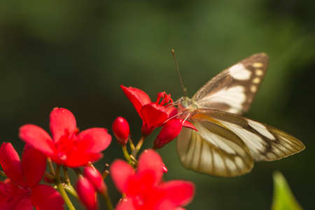 giant sunflower: White Butterfly and Red Flower Stock Photo