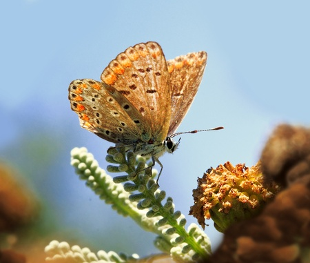 a closeup of a butterfly a flower and a blue sky Stock Photo - 9923731