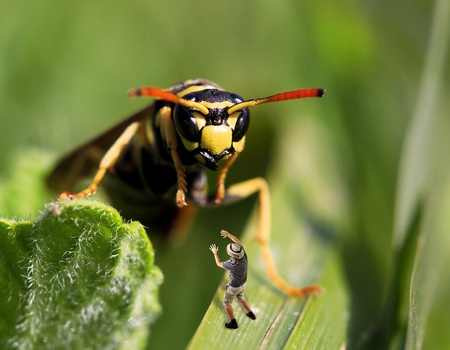 a giant wasp attack an human explorer Stock Photo - 9923764