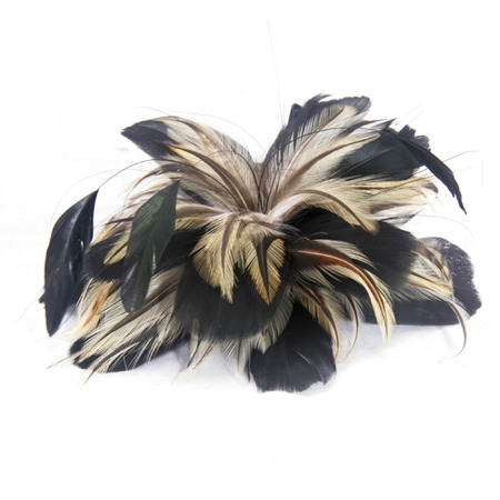 black feathered: Brown   Black Feathered Fascinator Stock Photo