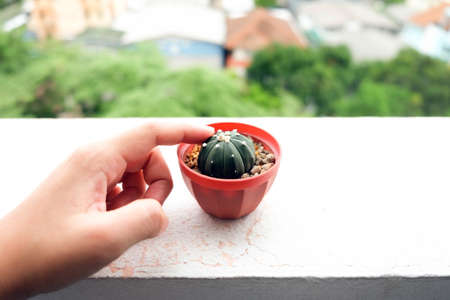Hand of woman touching cactus in a pot