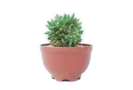 Kleine Pflanze im Topf, Sukkulenten oder Kaktus isoliert auf weißem Hintergrund