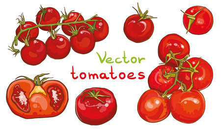 Colorful vector set of bright fresh tomatoes illustration. Single tomato, tomatoes on a branch, half a tomato. eps 10