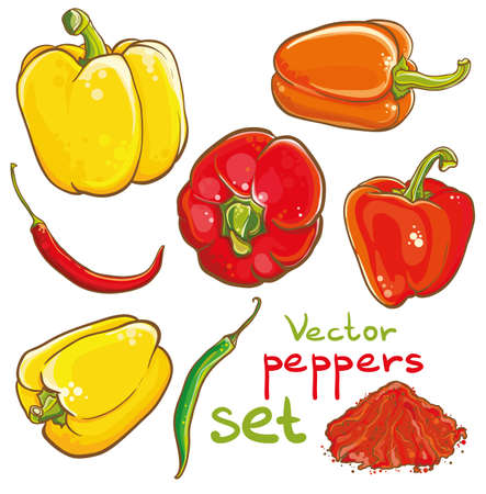 Vector illustration of peppers, chili peppers, cayenne and spice. Isolated. Set of peppers. Illustration