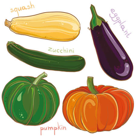marrow squash: Vector colorful freehand illustration of vegetables: eggplant, pumpkin, squash and zucchini. Design set. eps 10