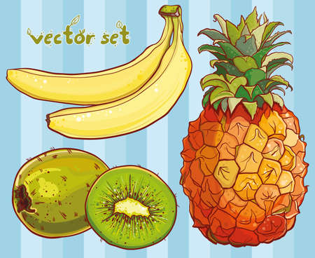 tropical fruits: Vector illustration with juicy tropical fruits: banana, kiwi, pineapple. Single banana, kiwi, pineapple, part of kiwi, isolated, colored and outline drawing of fruits.