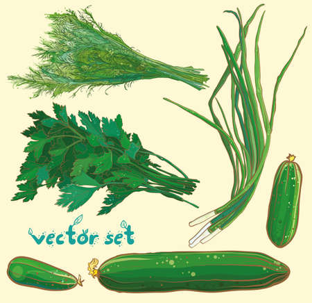 scallions: Vector illustration with scallions, dill, parsley, cucumbers. Vegetable and herbs set. eps 10