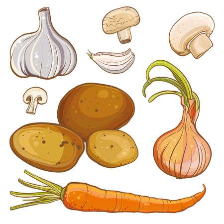タマネギ、ニンジン、ジャガイモ、ニンニク、マッシュルームのベクトル カラー イラスト。料理の食材。