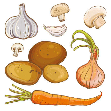 onion: Vector color illustration of onion, carrot, potatoes, garlic, mushrooms. Ingredients for cooking.