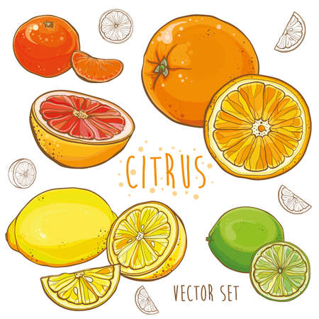 Vector set with lemon, lime, orange, tangerine, grapefruit. Bright illustration with juicy citrus fruit. eps 10 Stock Illustratie