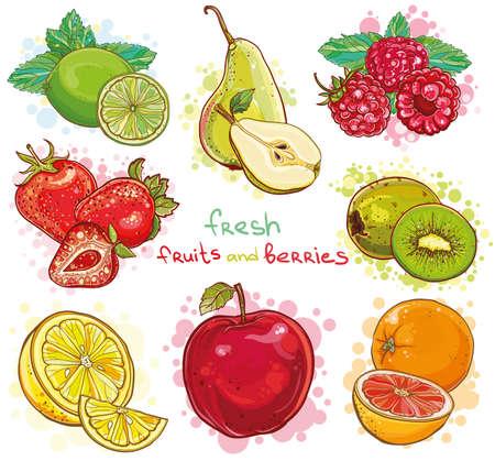 Vector set of illustration with fresh bright fruits and berries. Apple, kiwi, strawberry, raspberry, pear, lemon, lime, orange, grapefruit, mint.