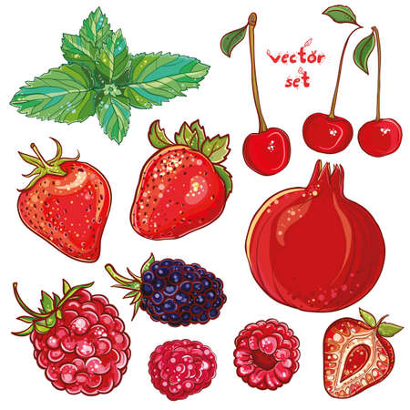 pomegranate: Vector set with pomegranate, strawberry, mint, cherry, raspberry, blackberry. Illustration of small fruits and berries. Fresh, juicy and colored. eps 10
