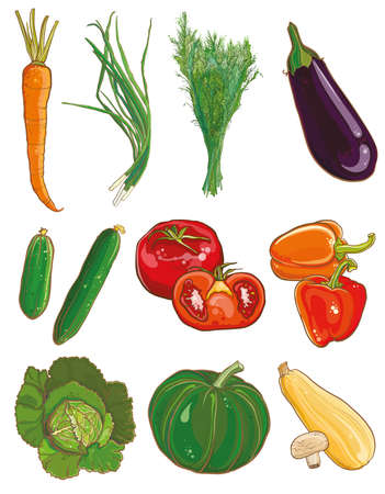 marrow squash: Vector illustration of vegetables: carrots, green onions, dill, eggplant, cucumber, tomato, pepper, squash, mushrooms, cabbage, savoy, pumpkin, vegetable marrow. Food ingredients set. eps 10