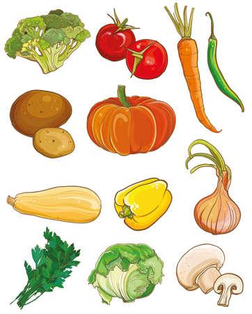 cebolla: Ilustraci�n vectorial de hortalizas: br�coli, tomates, zanahorias, chile, papa, calabaza, calabaza, pimiento, cebolla, perejil, col, champi�ones. Ingredientes del alimento fijados. eps 10