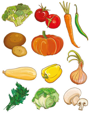 squash: Vector illustration of vegetables: broccoli, tomatoes, carrots, chili, potatoes, pumpkin, squash, bell pepper, onion, parsley, cabbage, mushrooms. Food ingredients set. eps 10
