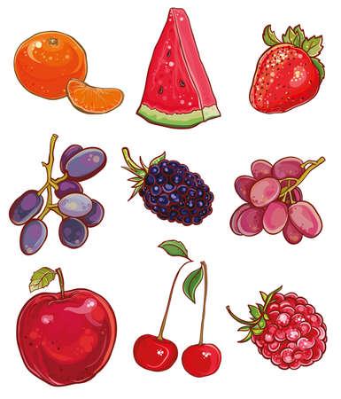 blackberries: Vector illustration of mandarin, watermelon, strawberries, grapes, blackberries, apple, cherry, raspberry.
