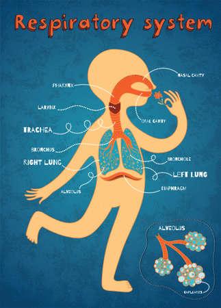 Sistema respiratorio humano para los niños. Vector ilustración de color de dibujos animados. Anatomía humana