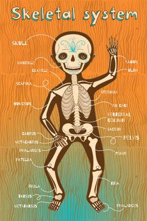 silueta niño: sistema esquelético humano para los niños. Vector ilustración de color de dibujos animados. esquema de esqueleto humano.