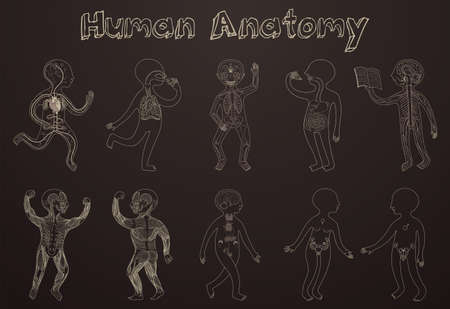 Educational illustration of human anatomy, systems of organs for kids. Vector cartoon poster with contour silhouettes on dark background. Stock Vector - 69238155
