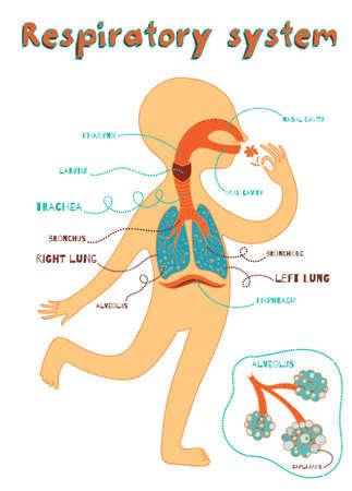 Sistema respiratório humano para crianças. Ilustração em vetor cor dos desenhos animados. Anatomia humana Ilustración de vector
