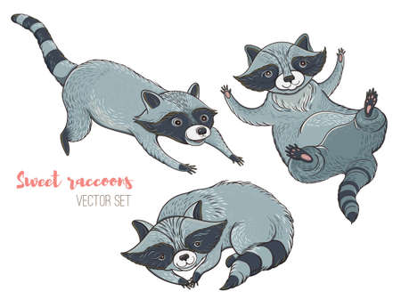 Vector illustration: set of cute characters raccoons. Isolated templates for design. Illustration
