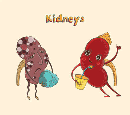 Cartoon vector illustration of healthy and sick human kidneys. Funny educational illustration for kids. Isolated characters. Illusztráció