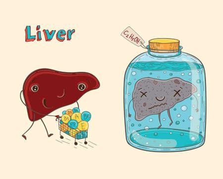 Cartoon vector illustratie van gezonde en zieke menselijke lever. Grappige educatieve illustratie voor kinderen. Geïsoleerde tekens.