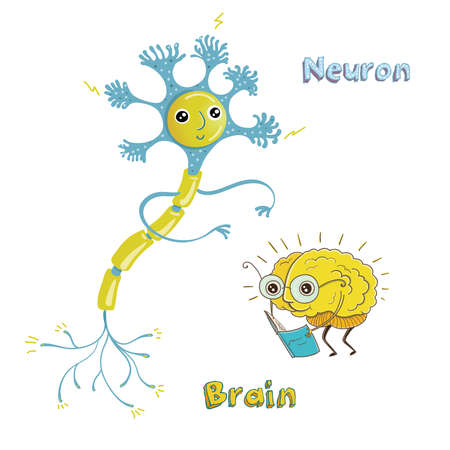 Vector illustration of structure of human neuron and healthy human brain. Funny educational illustration for kids. Isolated characters.