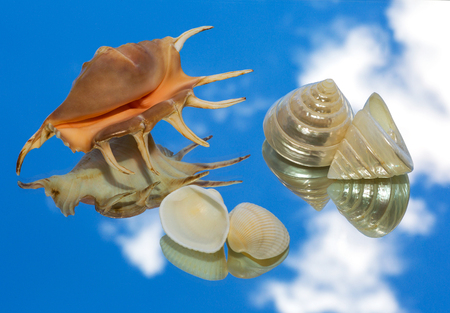 reflection of life: sea shells lying on a mirror and reflection of the sky. still life, wallpaper Stock Photo
