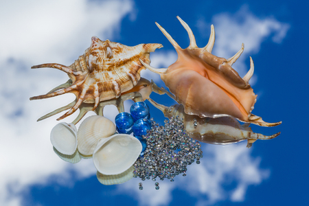 reflection of life: sea shells, decorative glass lying on the mirror and the reflection of the sky. still life, wallpaper