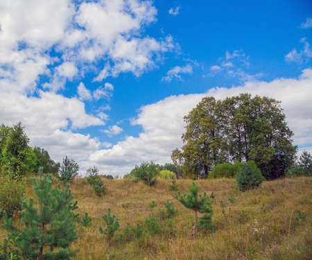 rural development: landscape with trees on the background of blue sky with clouds. Summer season
