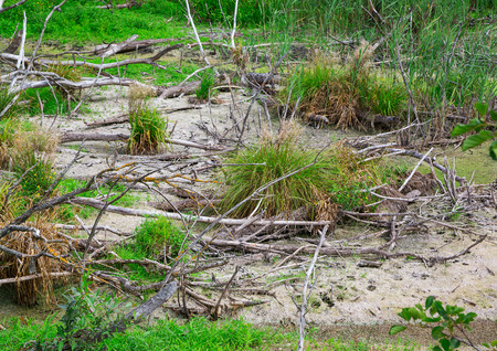 forest management: bad ecology in nature outdoors. water pollution. forest, flora. close-up