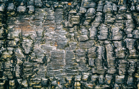 Burnt wood close-up. Wooden texture, background Фото со стока