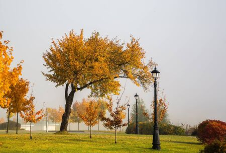 Autumn landscape of trees with beautiful yellow leaves in Loschitsky park, Old Manor Minsk, Belarus, golden autumn