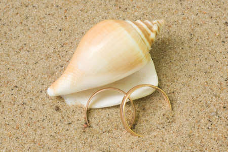 ring up: Seashell with wedding rings