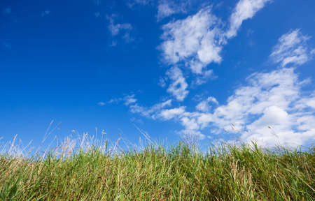 fluffy tuft: Blue sky and grass Stock Photo