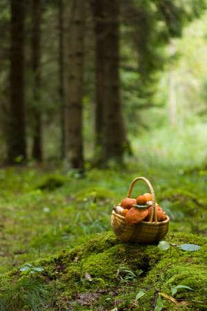 Basket full of mushrooms photo
