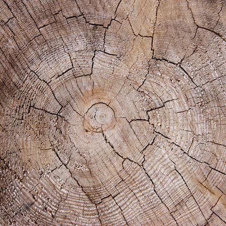 Dry cracked wood texture photo